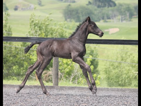 Video Guide for Presenting Your Foal